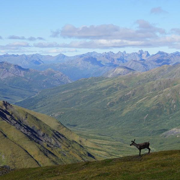 Silhouette de caribou devant un paysage de montagnes