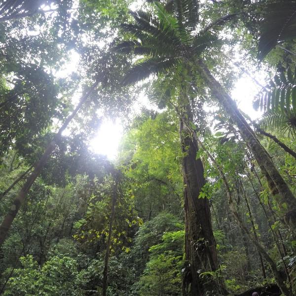 Das Bild zeigt einen Dschungel.