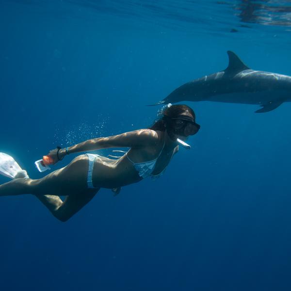Un plongeur évolue sous l'eau à côté d'un dauphin