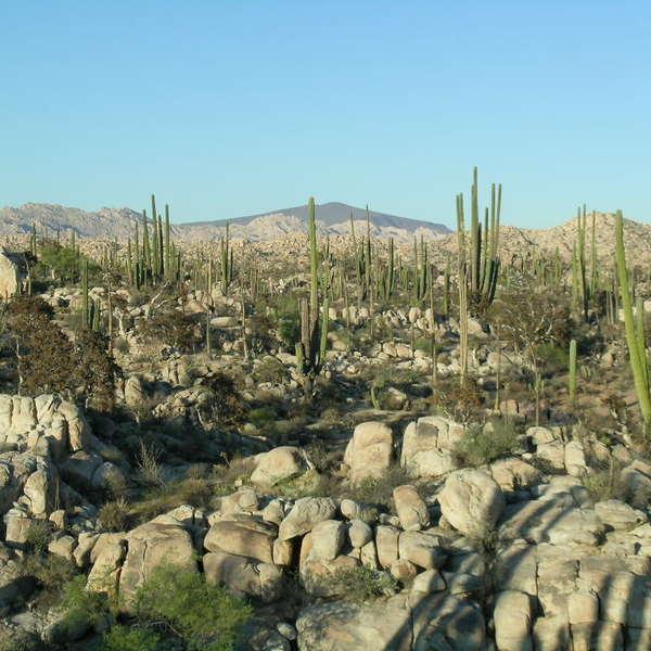 Der natürliche Steingarten bei Cataviña