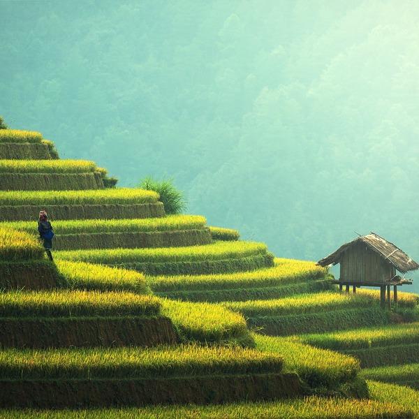 Risaie in Thailandia