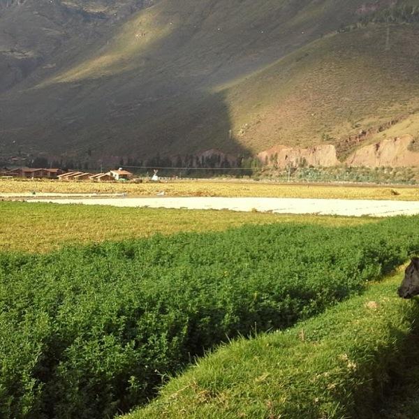 Einblick in die Agrarwitschaft im heiligen Tal der Inka