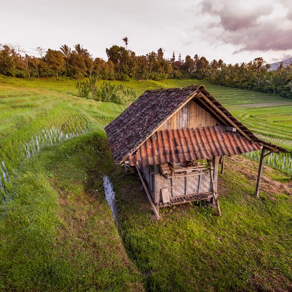Das Bild zeigt die Reisterrassen von Bali.