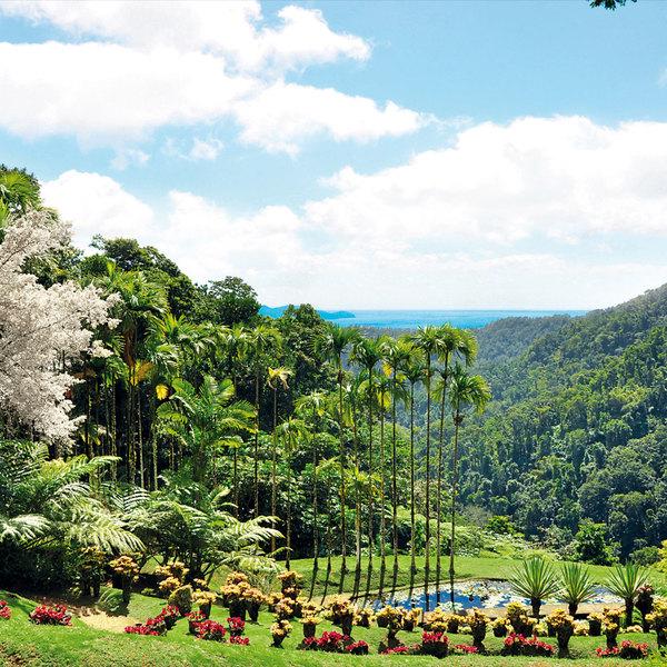 La Martinique détient en son sein une flore unique, la plus riche des Petites Antilles, d'une diversité exceptionnelle.