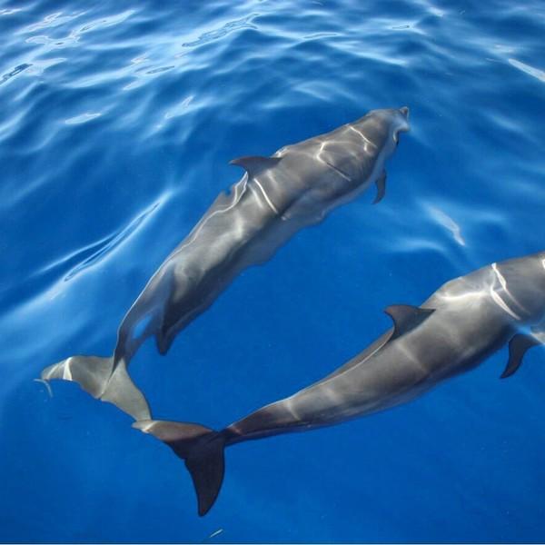 Dauphins, baleines et poissons tropicaux sont des habitués des eaux martiniquaises pour le plus grand bonheur des plongeurs.
