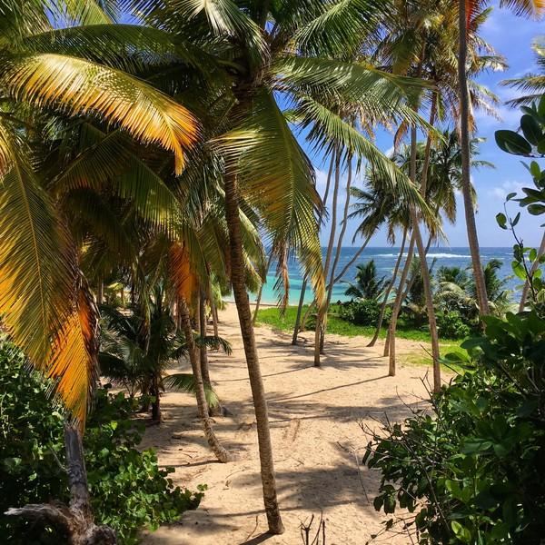 La plage d'Anse Michel, son sable doré et ses palmiers