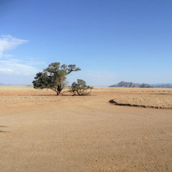 Das Bild zeigt die Namibwüste.