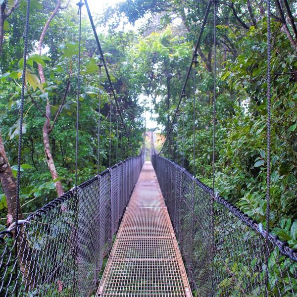 Das Bild zeigt eine Hängebrücke in Wald.