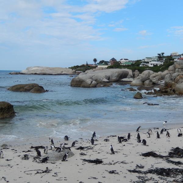Das Bild zeigt Pinguine am Strand.