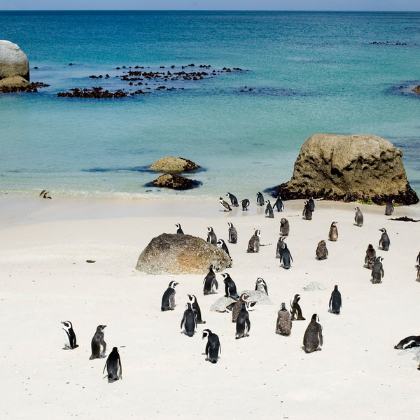 Boulders Penguins - who would deny a chance to see these adorable creatures!