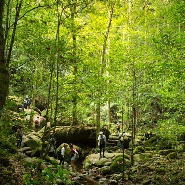 Das Bild zeigt Wanderer im Regenwald.