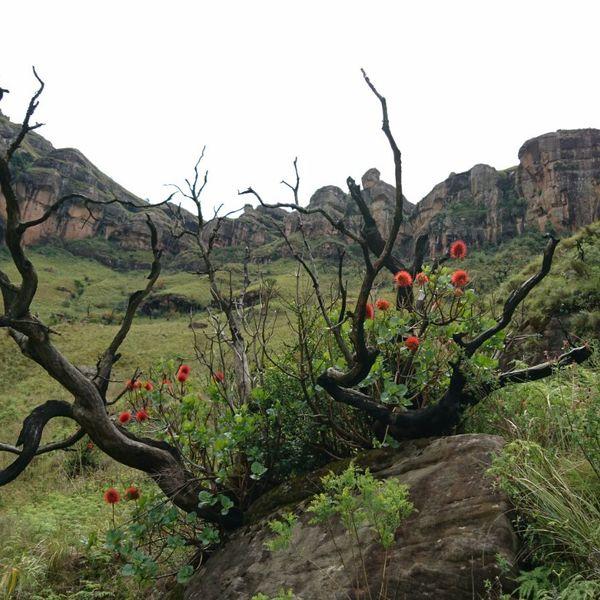 Drakensberge - idyllische und malerische Landschaft und eine wunderbare Ruhe.