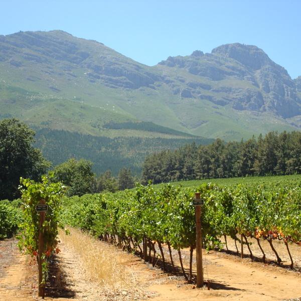 Gutes Essen und die weltbesten Weine finden Sie in Südafrikas Weingebieten.