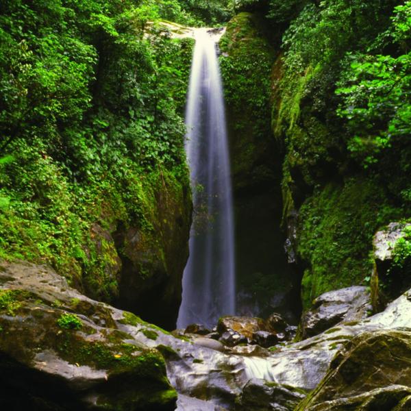 Das Bild zeigt einen tropischen Dschungel und Wasserfall.