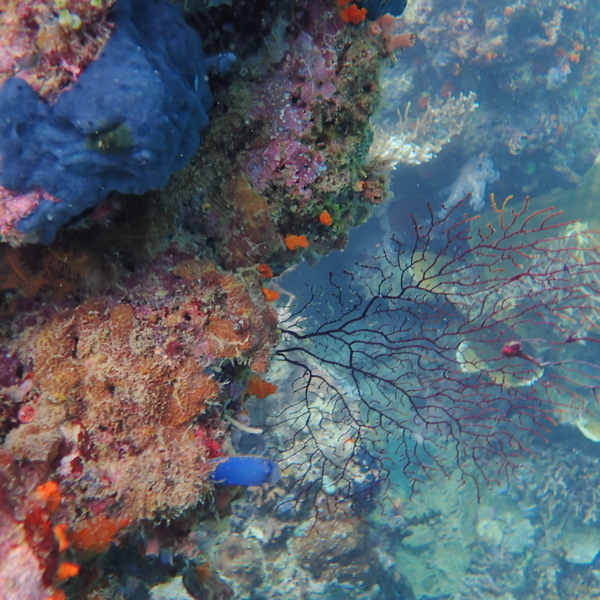 coraux marins