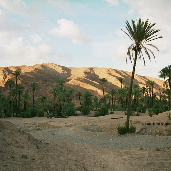 Das Bild zeigt eine Wüste.