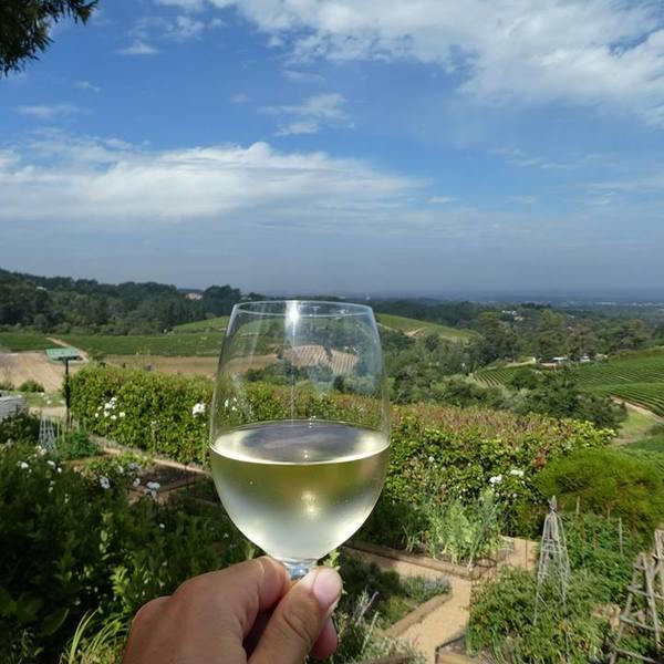 Unendliche viele Möglichkeiten an einer leckeren Weinprobe in und um Kapstadt teilzunehmen. Unerwähnt darf natürlich auch nicht das Gourmet Essen bleiben, welches überall zum Wein geboten wird. (Constantia Wine Valley)