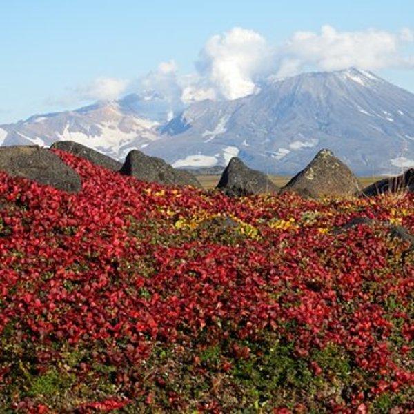 Reise nach Kamtschatka… Natur so wie man es heute selten erleben darf – Vulkane und Pazifischer Ozean, Geysers und Flüsse voll von Fisch – ein Traum, der hier wahr wird