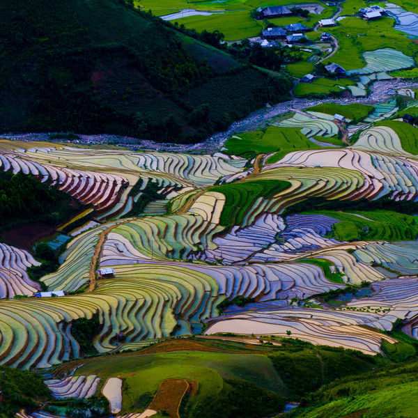 Vue sur des rizières en terrasses multicolores