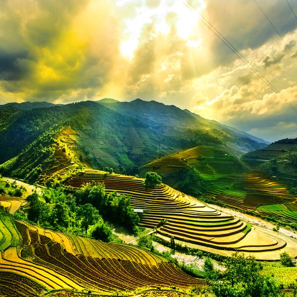 Paysage sur des rizières sous les rayons du soleil