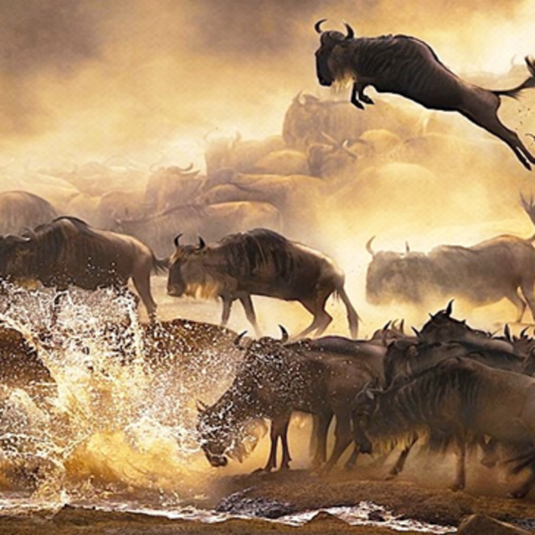 Your moment of remembrance when millions of wildebeests and zebras cross rivers and the eco-system balances itself