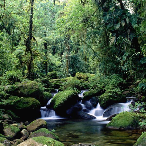 Das Bild zeigt den Regenwald.