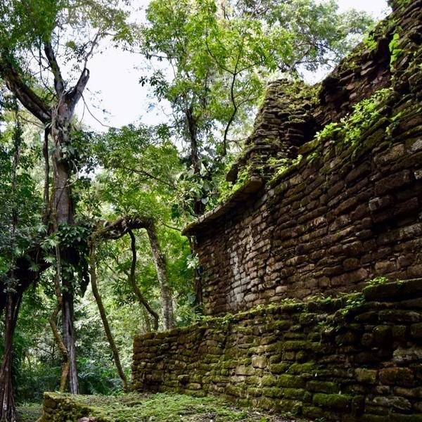 Ruines de temple maya dans la jungle