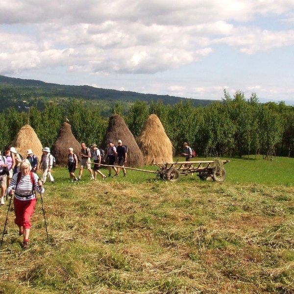 Des marcheurs traversent un champ moissonné, hérissé de meules de foins coniques, typiques de la campagne roumaine