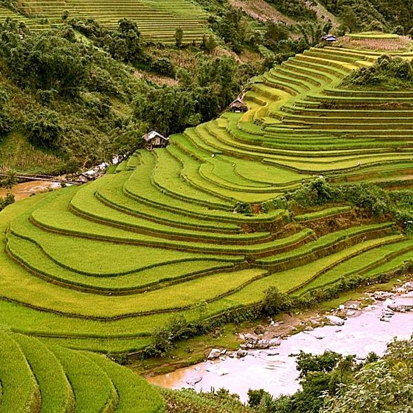 Paysage de coteaux couverts de cultures en terrasse entourés de rivières