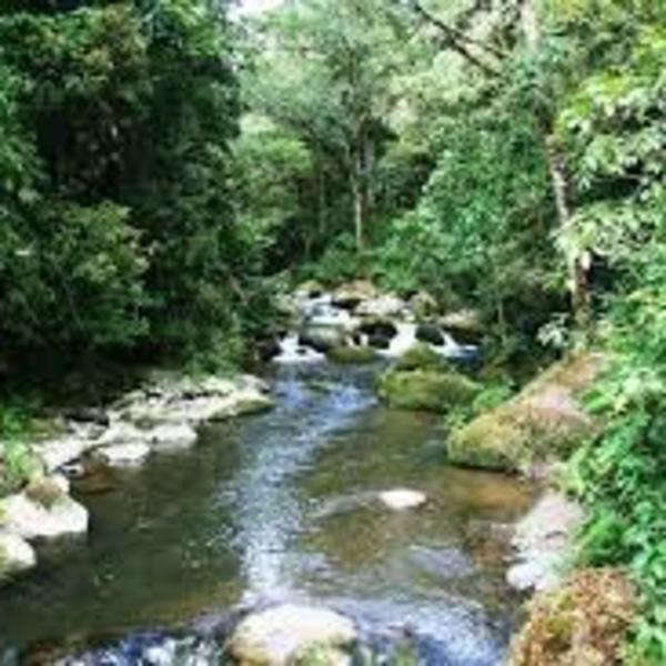 Ruisseau rocailleux traversant la forêt tropicale