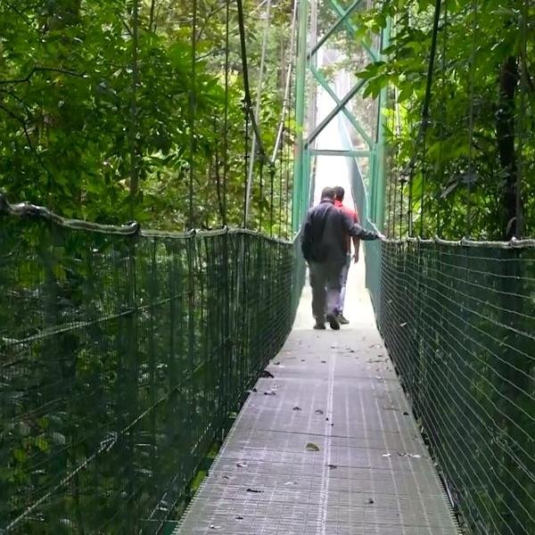 Puente colgante entre arboles
