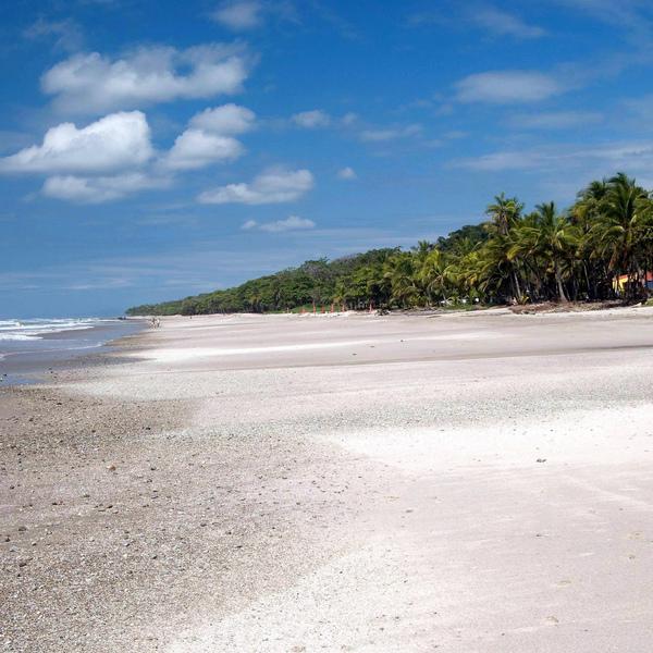 Plage de sable blanc bordée de palmiers