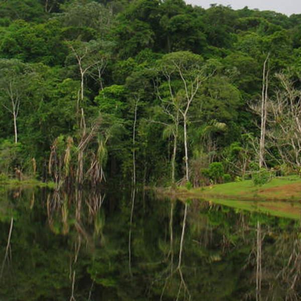 Forêt tropicale se reflétant dans une étendue d'eau
